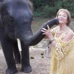 elephant-soins-magnetisme