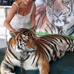 tigre-soins-magnetisme-2